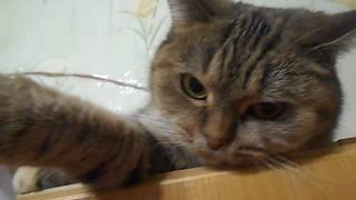 Кошка Ромашка и бумажка))