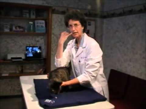Giving your cat liquid medication