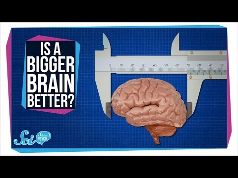 Does a Bigger Brain Make You Smarter?