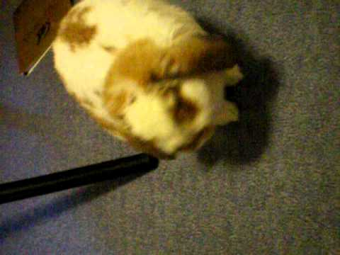bunny video Chubby