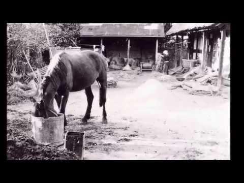 日本有数の良馬、南部馬を産出   by 青森歴史街道探訪