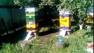 пчеловодство пошла работа