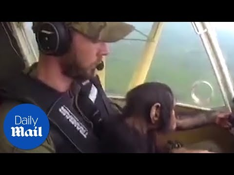 Adorable moment chimpanzee co-pilots his own rescue mission - Daily Mail