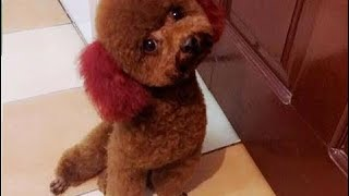 The most funny moments of Animals - Animals are so funny that you can die of laughter  # 7