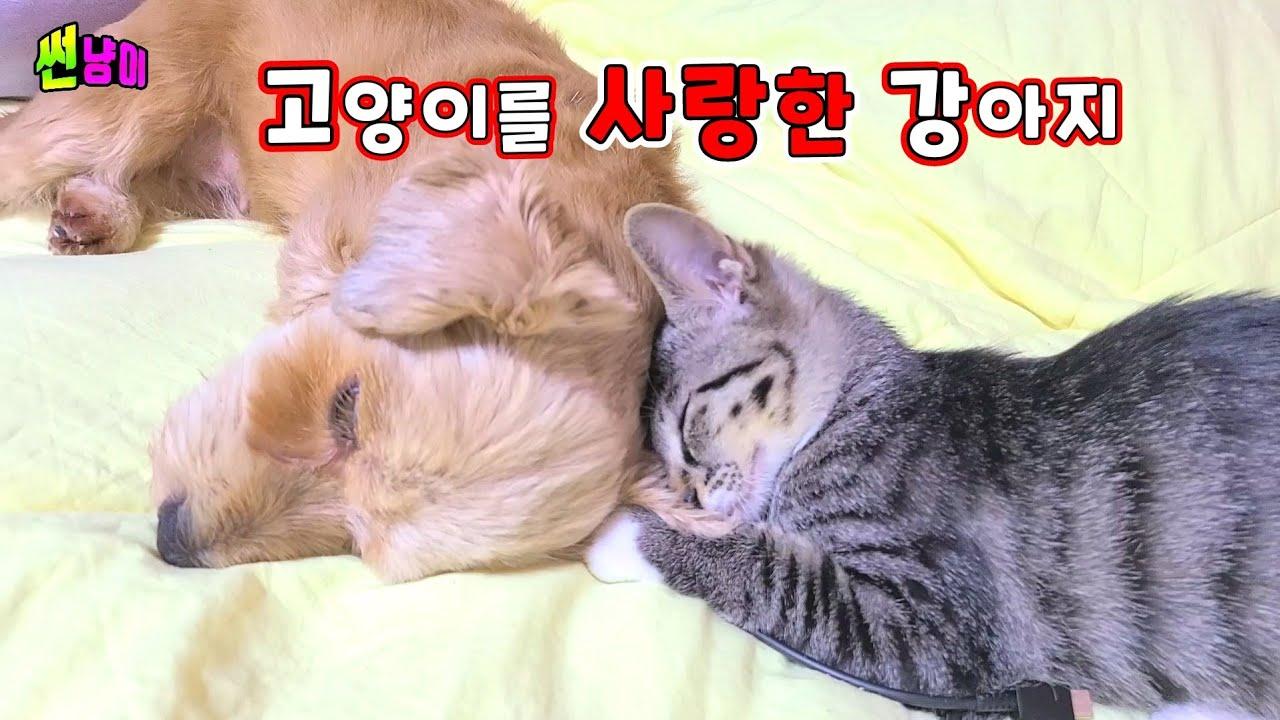 고양이를 사랑한 강아지 고양이만  쫓아다니는 강아지 가슴으로 낳은 고양이 키우는 강아지 고양이 심장사상충약
