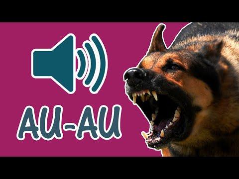 Efeito Sonoro de Cachorro Latindo - Latido de Cães de 8 Raças