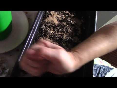 Сеем семена однолетников под зиму.