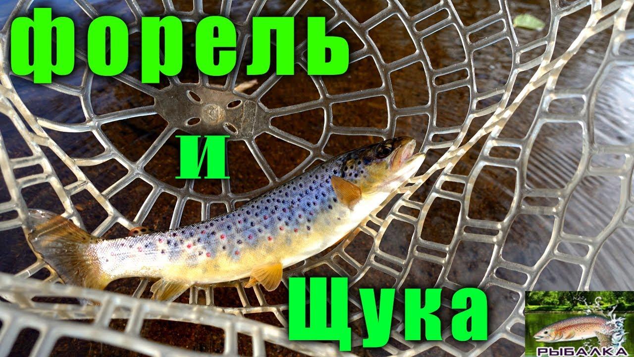 Форель. Щука. Рыбалка в Ленинградской области. Октябрь 2021.