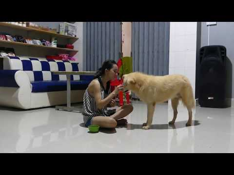 LOVELY SMART GIRL PLAYING BABY CUTE DOGS AT HOME HOW TO PLAY WITH DOG & FEED BABY DOGS #43
