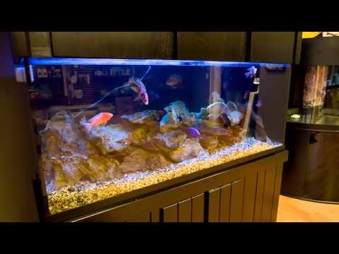 Salem, NH | Dream Marine Aquarium Services | Designing