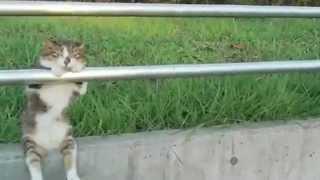 Funny cat sitting on the rails / Смешной кот сидит на перилах