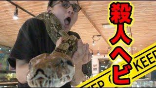 特定危険生物のヘビと直接対決してみた