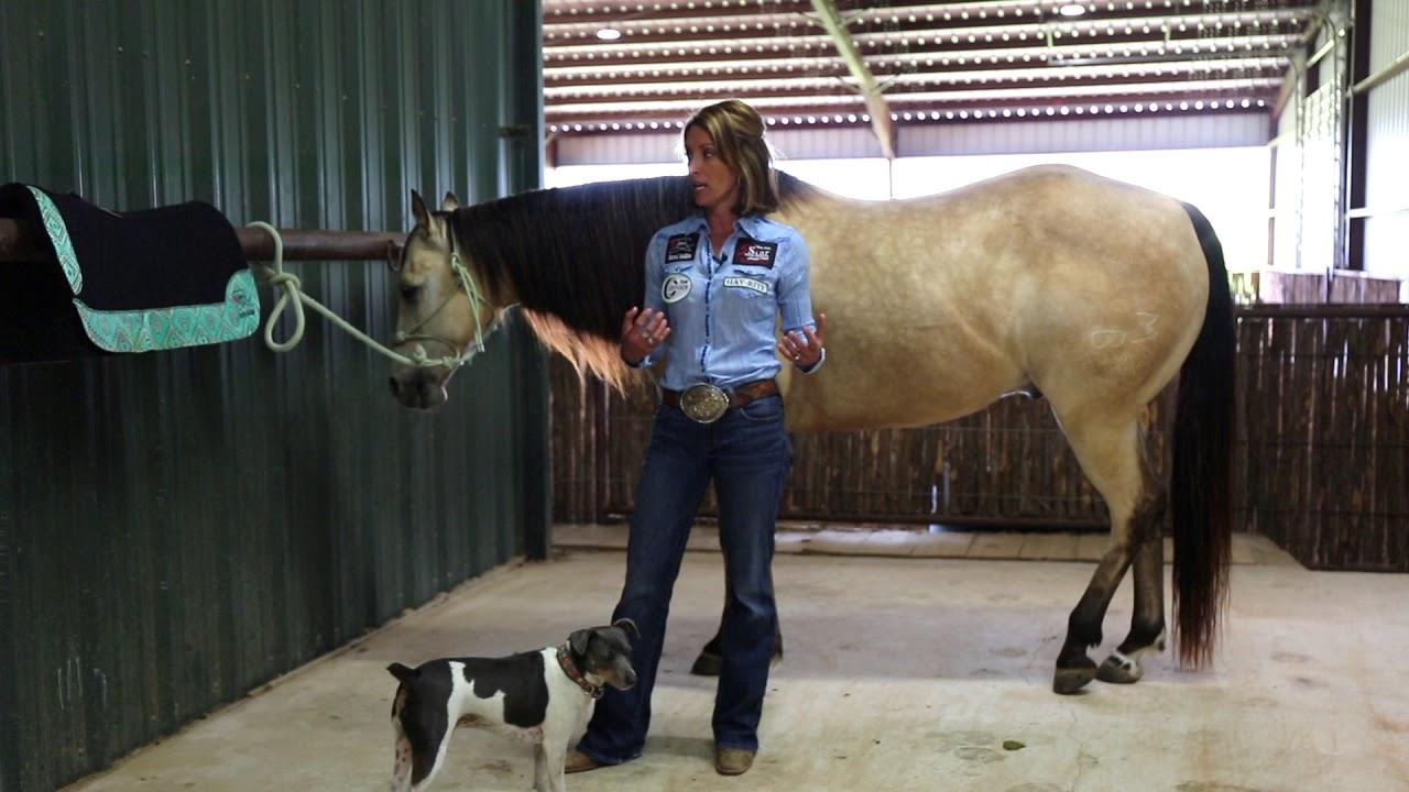 Saddle Pads, Saddle Blankets, Cinches | 5 Star Equine, manufacturer