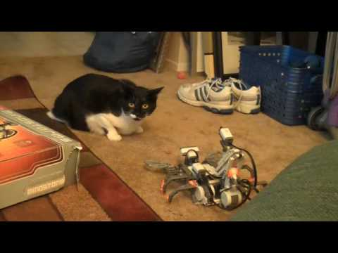 Cat Spooked By Lego Mindstorm Scorpion Robot Youtube