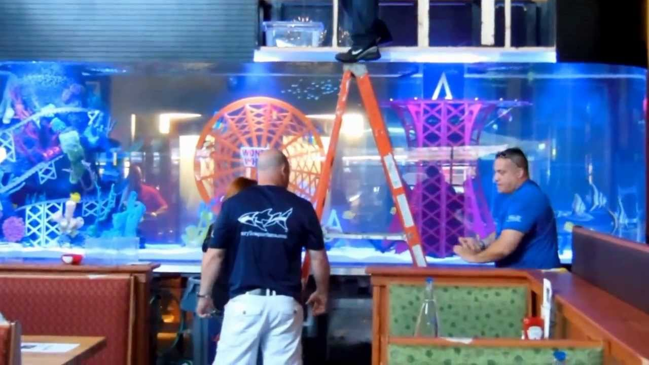 Behind The Scenes Installing The Applebees Aquarium For