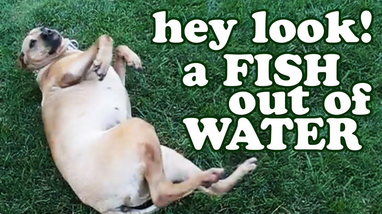 Fish That Barks Like A Dog