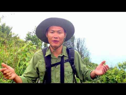 Wildlife to discover on Monkey Mountain