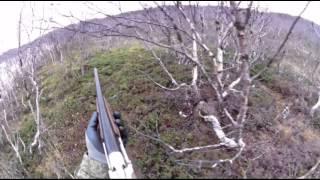 Охота на куропатку. Кольский полуостров