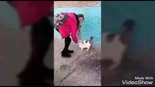 Кормили беременную кошку | pets tv
