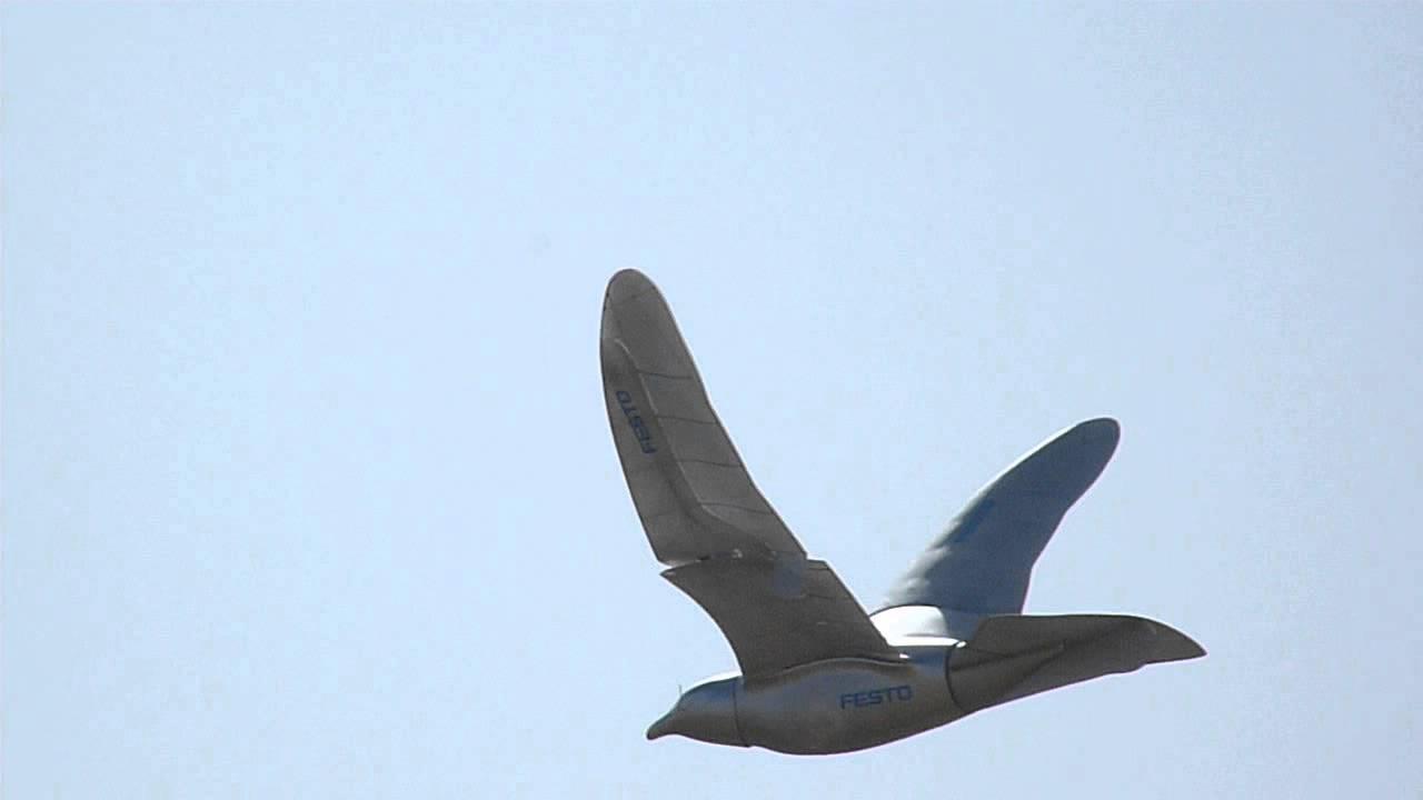Drone Bird At Coachella 2014