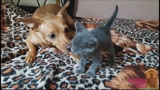 Песенка про собаку и котенка. Видео для детей