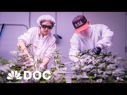 Weed City, USA: A Desert Town Turns To Cannabis To Find Jobs & Fight Painkiller Addiction | NBC News