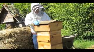 Moving Up with Ladders in a Warre Hive