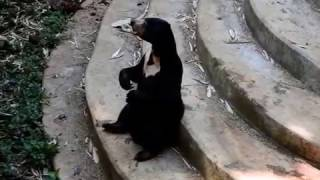 Beruang Madu Minta Makan
