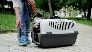 Транспортировка собак ➠ Ознакомьтесь с советами ветеринара(, 2016-11-30T14:58:45.000Z)