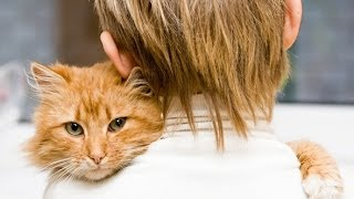 Cats Love Their Human Owners Compilation 2014 [NEW]