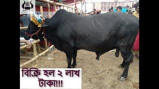 Mohammadpur-Bosila Gorur Haat 2018/মোহম্ম্দ্পুর-বোসিলা গরুর হাট ২০১৮|Bangladesh er Goru Lovers BDGL