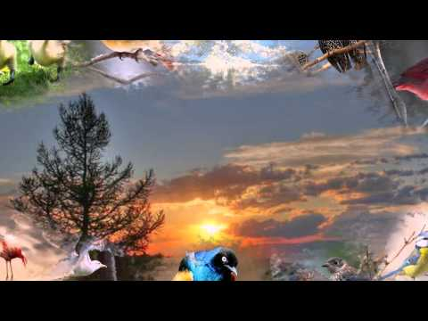 Песня А. Градский, Ж. Бичевская - Песня о птицах из фильма