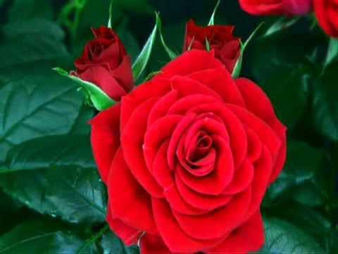 Naissance D Une Fleur Youtube