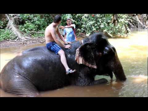 GOA - washing of elephant