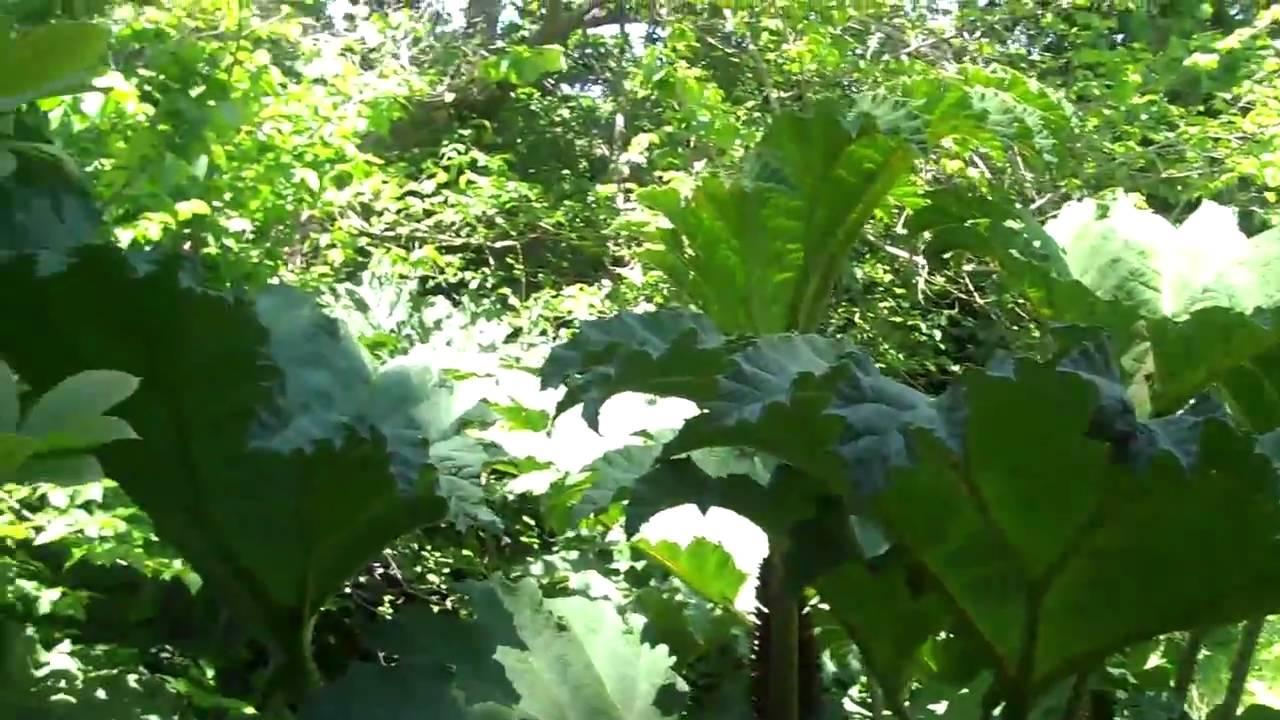 Mas jardines y plantas exoticas museo de young san for Jardin de plantas