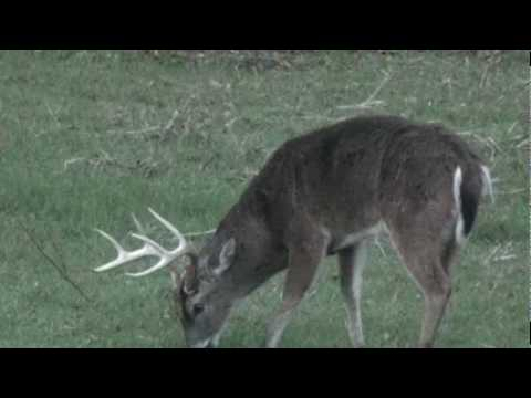 Deer hunting in mississippi youtube for Mississippi out of state fishing license