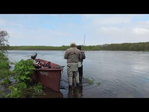 Рыбалка на Камчатке. Ловля чавычи на 7 кг видео.