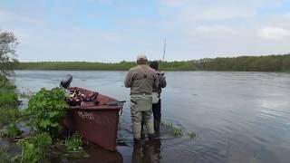Рыбалка на Камчатке. Ловля чавычи на 7 кг видео.(Андрюха поймал хорошую чавычу на 7 кг и решил ее отпустить обратно в речку., 2016-02-10T16:22:34.000Z)