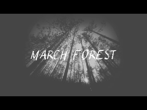 March Forest: Sony A7S II Pinhole Video