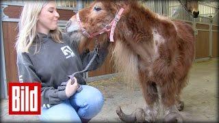 Pony 10 Jahre eingesperrt - Mega-Hufe - Von Tierschützern gerettet