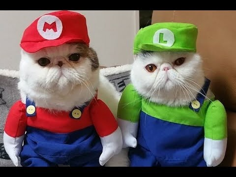 Cats Falls Compilation - Super Mario Bros Style