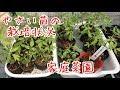 やさい苗の栽培 『家庭菜園だより』grow vegetables の動画、YouTube動画。