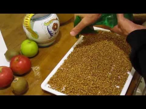 How to Tribest Sproutmans Soil Free Deluxe Grow Wheatgrass