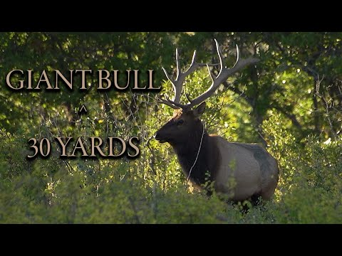 INSANE elk hunt! HUGE New Mexico Bull called into 30 YARDS!!!