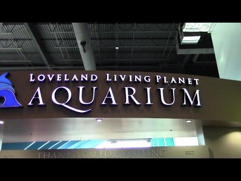 Loveland Living Planet Aquarium Draper Utah