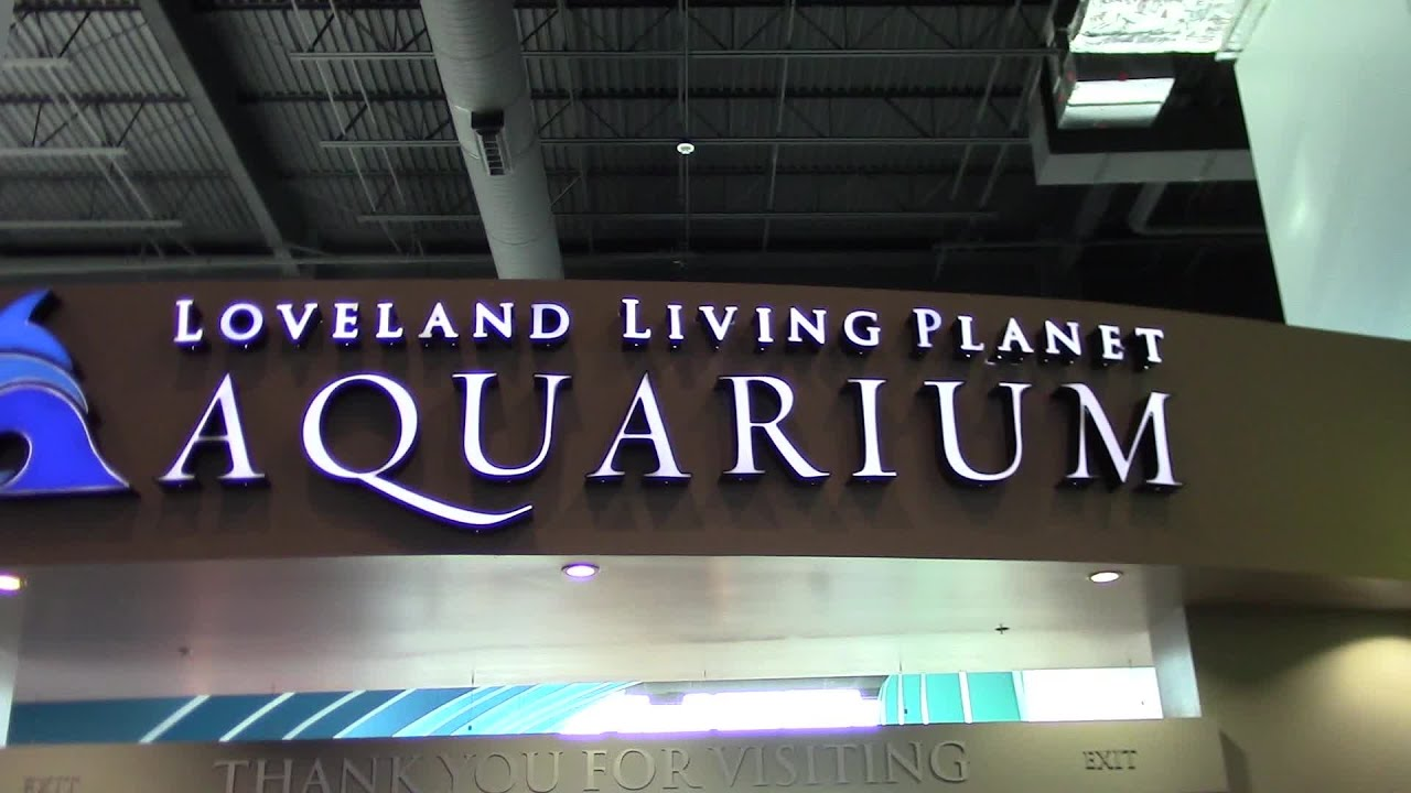 Loveland Living Planet Aquarium Draper Utah Youtube