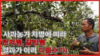 사과농사 농약 처방에 따라 탄저병, 갈반병의 차이가 이…