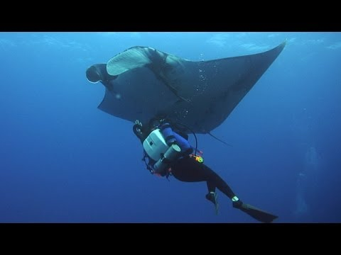 Socorro Tauchen mit Mantas und Delphinen - Sondertour von Tauchertraum