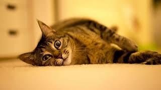 Чем можно заменить наполнитель для кошачьего туалета в домашних условиях?