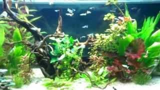 Schnecken, Garnelen und jede Menge Fische